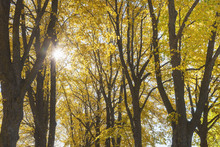 Canvas print - Autumn Trees