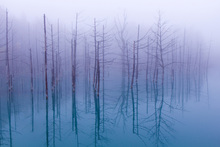 Fototapete - Misty Blue Pond