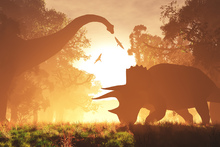 Canvas print - Dinosaur Morning