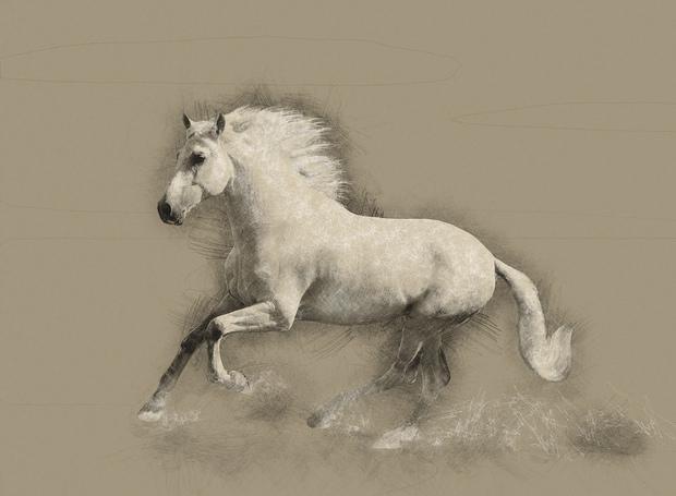 Horse Drawing  Tapetit  tapetti  Photowall