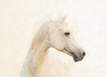 Canvastavla - White Horse Painting