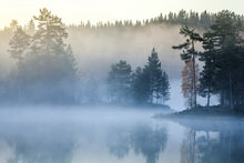 Wall Mural - Norwegian Mist