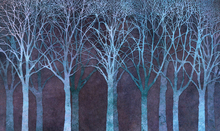 Wall Mural - Birch Grove Night Blue