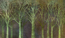 Wall mural - Birch Grove Night Green