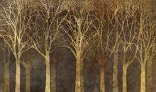Wall mural - Birch Grove Night Sepia