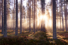 Фотообои - The Enchanted Forest