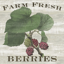 Canvas print - Farm Fresh Raspberries