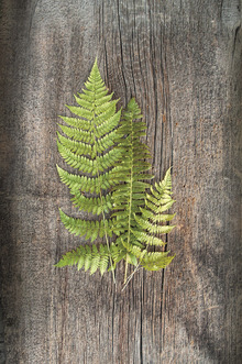 Canvastavla - Woodland Fern