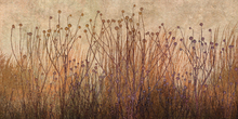 Wall Mural - Copper Grass Silhouette