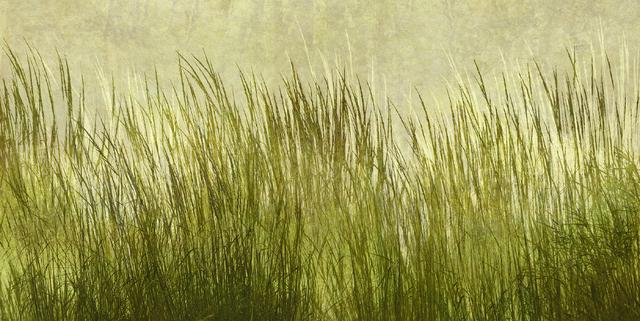 Green grass silhouette