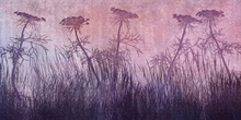 Wall mural - Purple Grass Silhouette