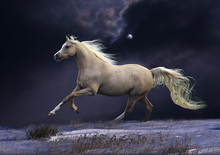 Fototapet - Horse in Moonlight