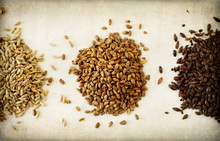 Canvastavla - Malt Varieties