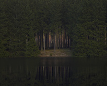 Wall mural - Glade Reflecting in Still Water