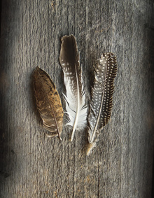 Wall Mural - Feathers on Wood II