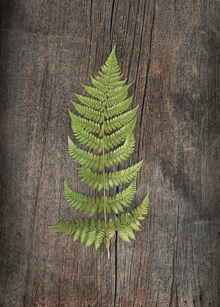 Canvastavla - Woodland Fern II