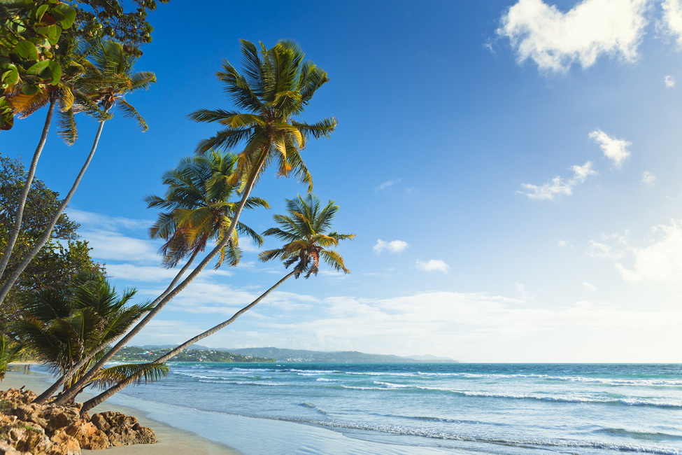 Palms and Beach, Trinidad and Tobago