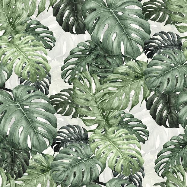 botany monstera wall mural photo wallpaper photowall. Black Bedroom Furniture Sets. Home Design Ideas