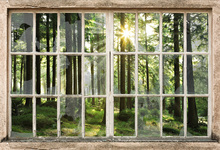 Wall mural - Sunset in Forest Through Broken Window