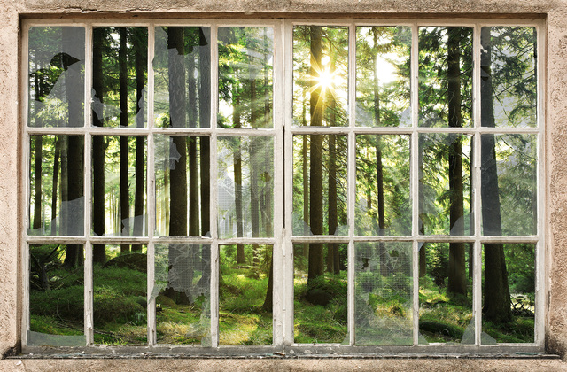 Sunset in forest through broken window wall mural for Broken glass mural