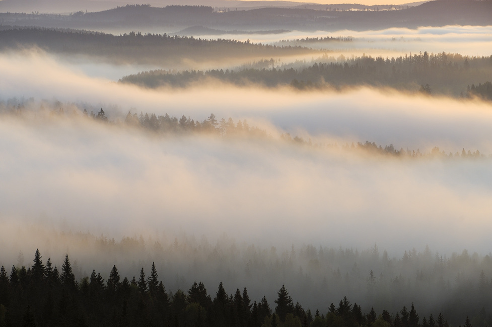 Fog in Bergslagen, Sweden