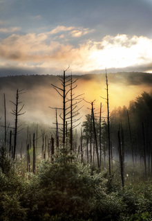 Wall mural - Vermont Swamp at Sunrise
