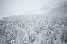 Canvas print - Snowy Firs in Jokkmokk, Sweden