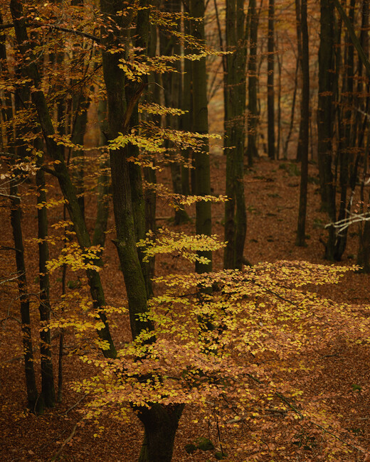 Autumn forest wall mural photo wallpaper photowall for Autumn forest wall mural