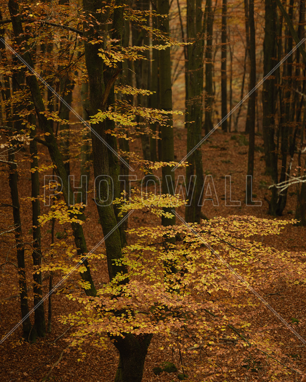Autumn forest wall mural photo wallpaper photowall for Autumn forest 216 wall mural