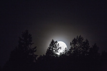 Lerretsbilde - Moonlight over Medelpad, Sweden, Europe