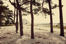 Fototapete - Caravan and Pines in Gotland