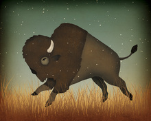 Canvastavla - Buffalo Bison