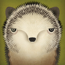 Wall mural - Baby Hedgehog