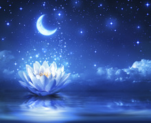 Canvastavla - Waterlily Moon
