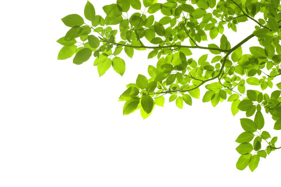 Green Leaves Corner Wall Mural Amp Photo Wallpaper Photowall