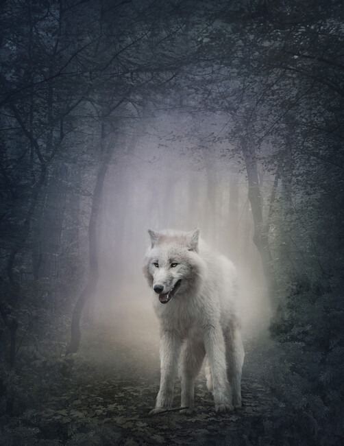 White Wolf In The Night Forest Wall Mural Amp Photo