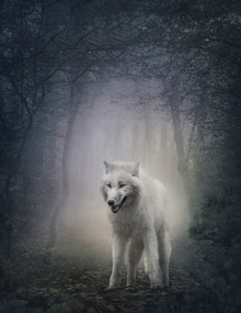 Impresión sobre lienzo - White Wolf in the Night Forest