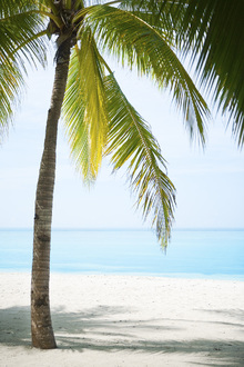 Canvas print - Palm Tree in Bohol, Philippines