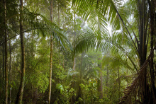 Canvas print - Borneo Tropical Rainforest