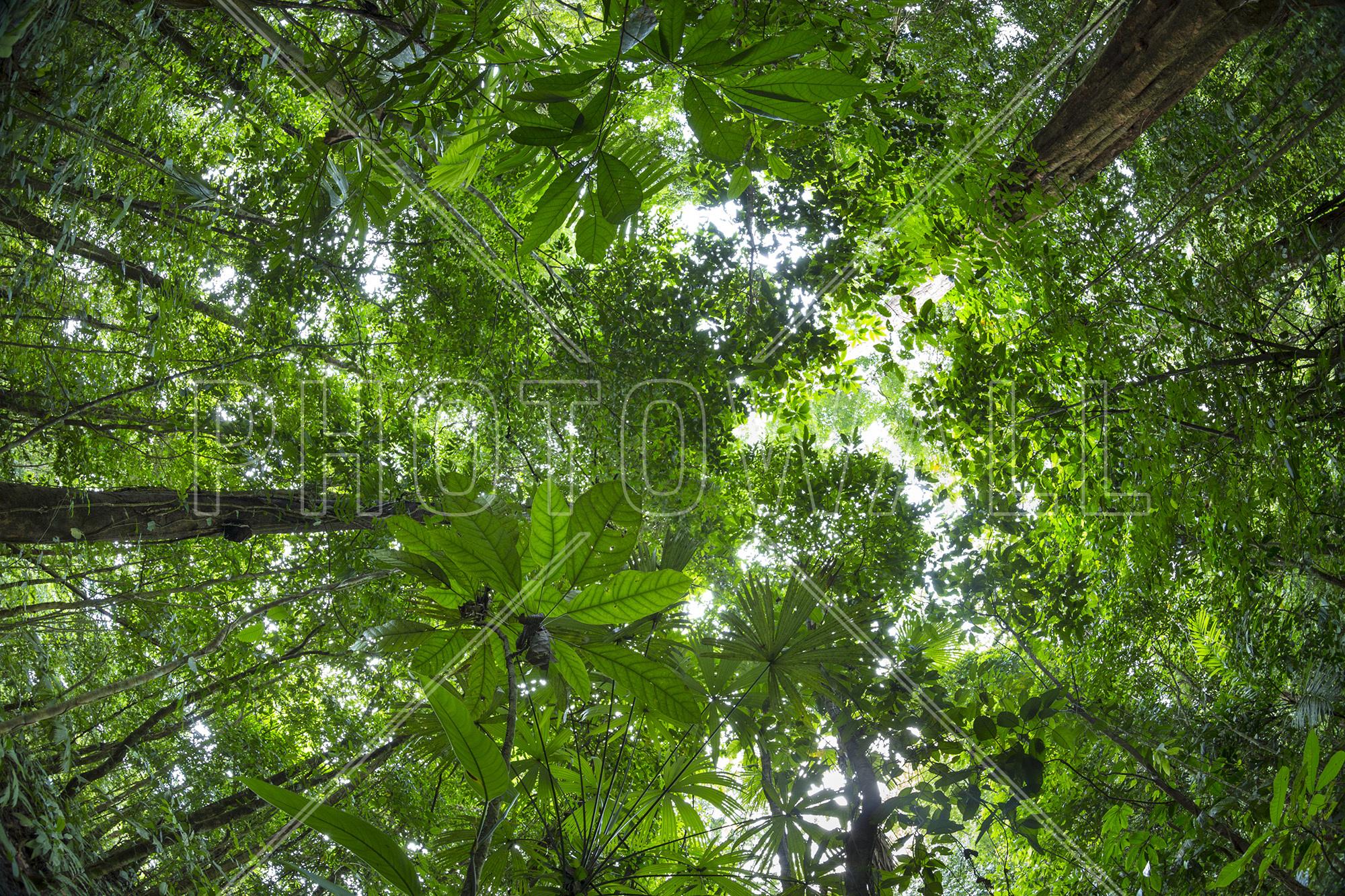 Rainforest Canopy & Rainforest Canopy - Canvas Print u0026 Canvas Art - Photowall