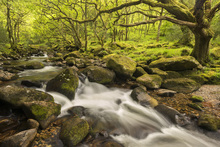 Fototapet - River Plym in Dewerstone Wood, Devon, England, UK