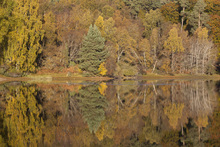 Canvas print - Trees Reflecting in Loch Vaa, Highlands, Scotland, UK