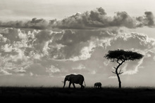 Canvas print - Silhouettes of Mara, black and white
