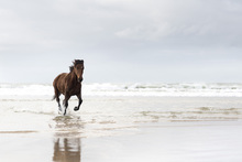 Wall mural - Galloping on the Beach