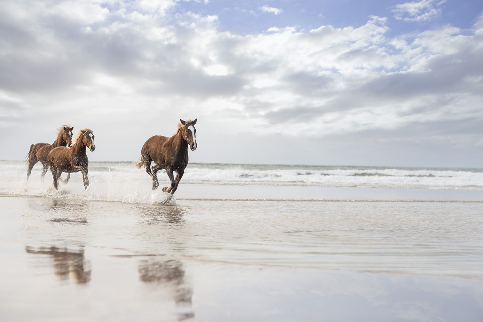 Horses on South African Beach
