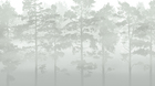 Wall mural - Misty Pine Forest - Green