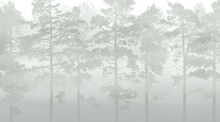 Fototapeta - Misty Pine Forest - Green
