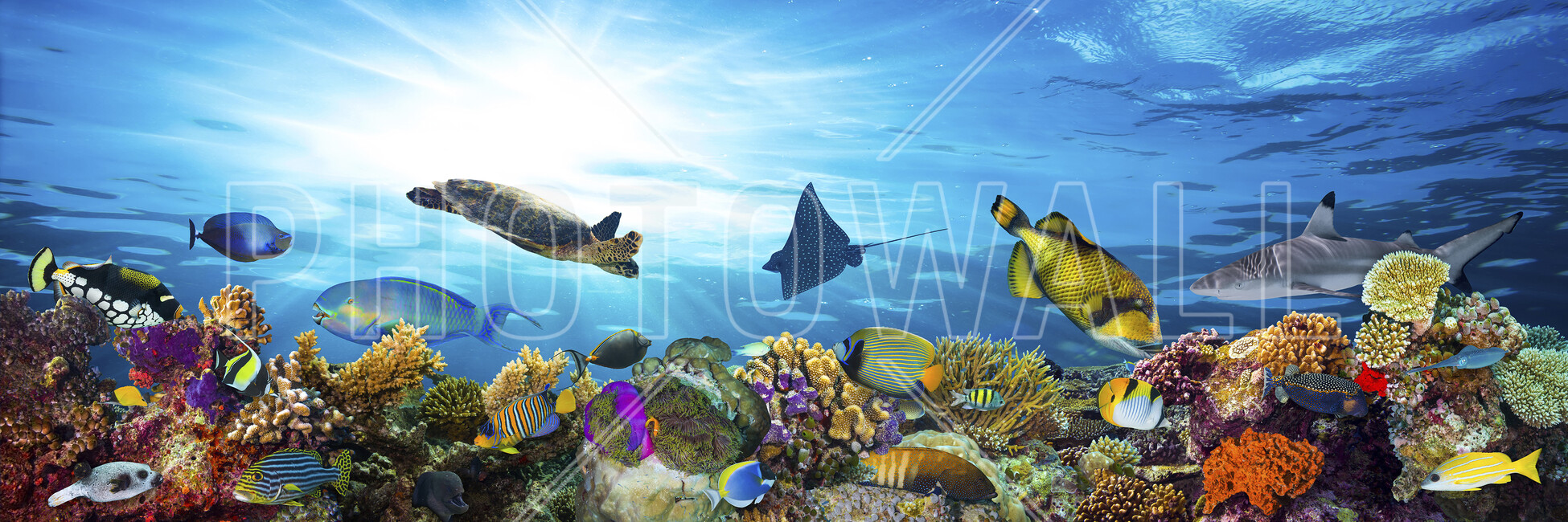 Coral reef panorama wall mural photo wallpaper photowall for Coral reef mural