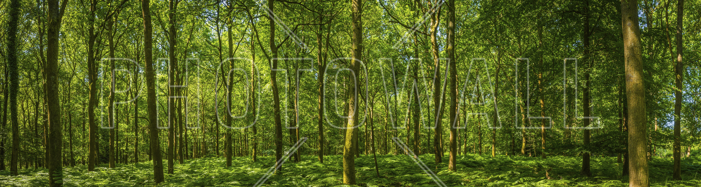 emerald green panorama forest wall mural photo wallpaper emerald green panorama forest