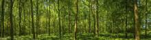 Canvas print - Emerald Green Panorama Forest